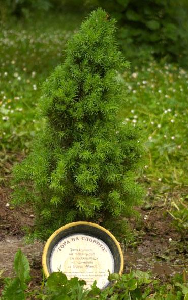 Още едно дърво от гората на словото е на свобода (понякога свободата означава да пуснеш корени на своя земя...)